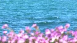 Blommor och hav